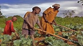 CENTRAFRIQUE : LE PAYS ET LES HOMMES
